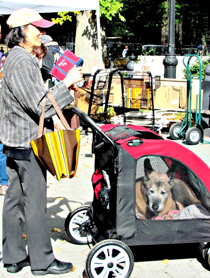 germanshepstroller